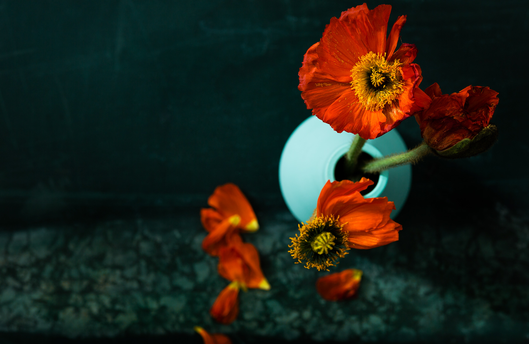 Still Life Photography Poppy
